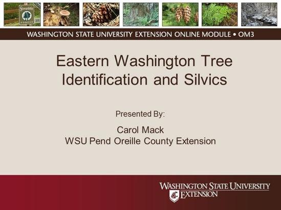Eastern Washington Tree Identification and Silvics- online module cover