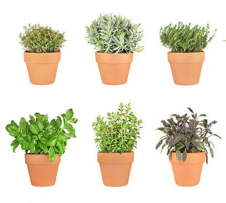 Imagen para la categoría Plants
