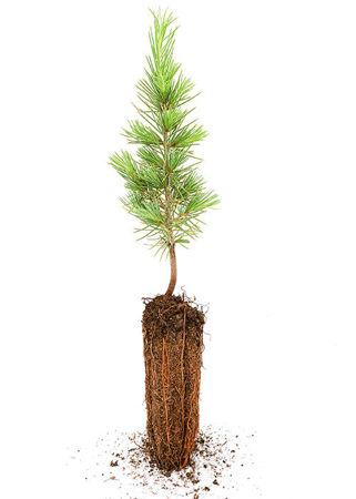 Imagen para la categoría Sustainable Development