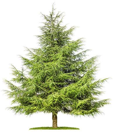 Imagen para la categoría Forestry and Range